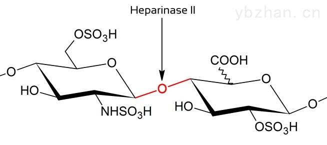 重组肝素酶II